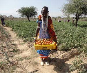 Kajiado Women group reap big after practising CSA